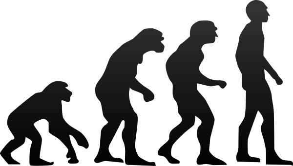 Human evolution resized 600